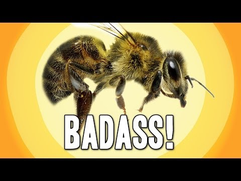 9 Facts That Prove Bees Are Awesome