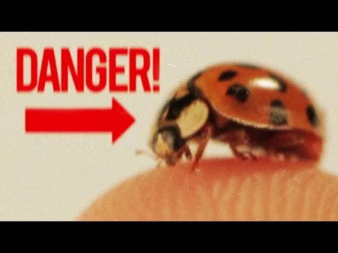 BADASS Facts About Ladybugs