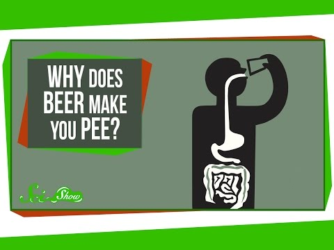 Why Does Beer Make You Pee?