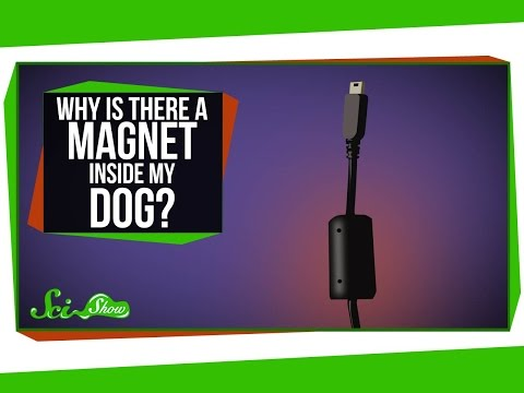 Why Is There a Magnet Inside My Dog?