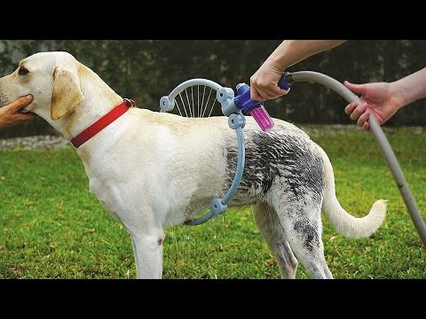 10 Amazing Inventions For Your Pets