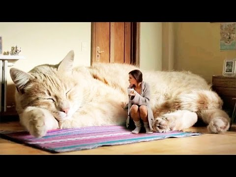 10 Largest Cats In The World