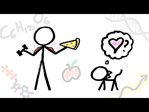 What is the Purpose of Life? (Big Picture Ep. 5/5)