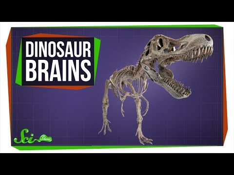 Where Are All the Dinosaur Brains?