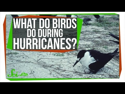 What Happens to Birds During Hurricanes?