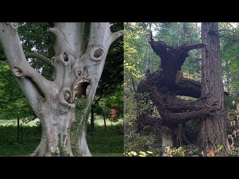 Trees That Emerged From The Depths Of Hell