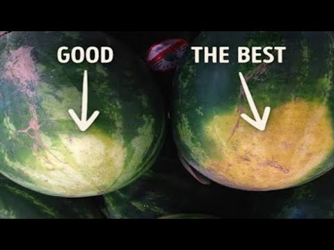 How To Pick Perfect Fruits Expert Farmer Shares His Best Tips