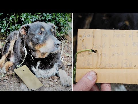 Dog collapses at their door – then they see a note on his collar and grab the phone