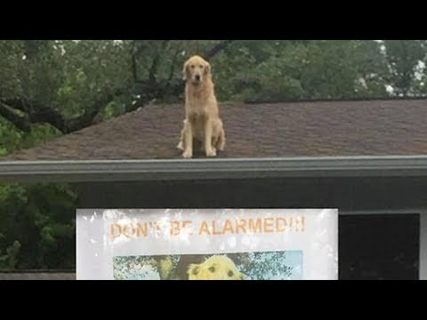 Dog Is Spotted Sitting On Roof Of House, The The Neighbours Read A Sign That Explains Why