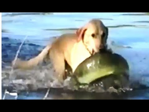 Man Takes His Dog Fishing, But What Dog Comes Out Of Water With- Prepare To Be Stunned
