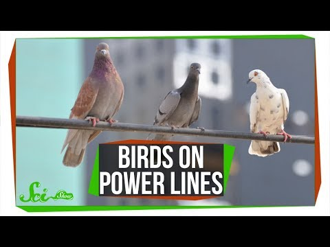 Why Don't Birds on Power Lines Get Zapped?