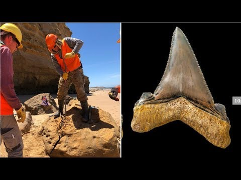 Australian Scientist Found A Tooth So Big That It's Hard To Believe This Monster Actually Existed