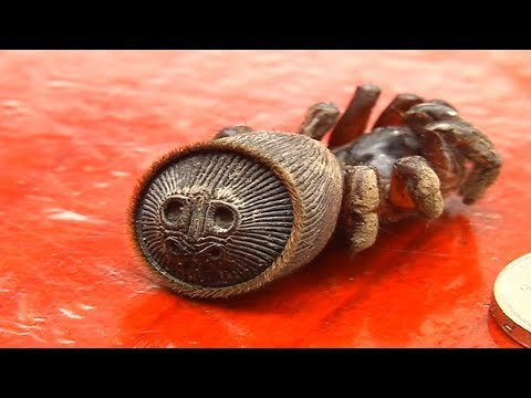 A Farmer Thought He'd Found An Ancient Relic  But Then He Realized It Was The Rarest Of Spiders