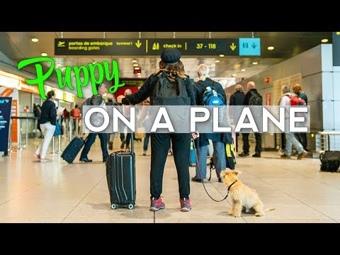 Flying With Your Dog Internationally and In Cabin | What You Need to Know