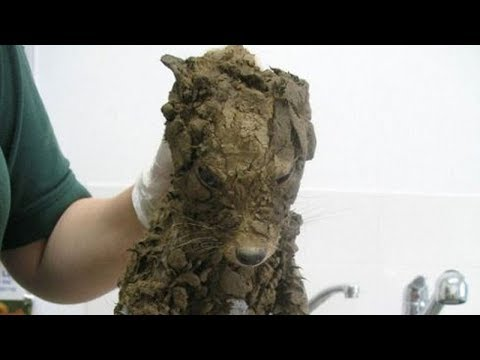 They Thought They Saved a Puppy Covered With Dirt – But They Got Quite the Surprise at the Vet