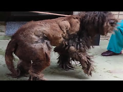 :When Rescuers Found This Neglected Creature Vet Had No Idea What It Was