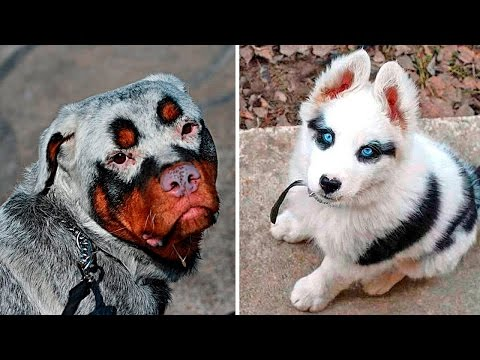 10 Dogs With Unusual Colors