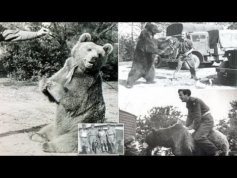 Heart-Melting Story of the Bear Named Wojtek Who Went to War