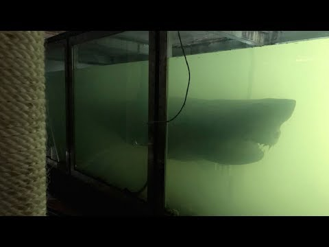 Man Exploring Abandoned Wildlife Park and Finds a Huge Shark Floating in a Tank like a Ghost