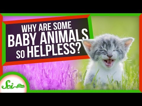 Why Are Some Animal Babies So Helpless?