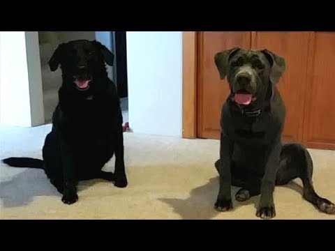 A Couple Were Devastated After Losing Their Dogs, but 3 Days Later There Was a Knock at the Door