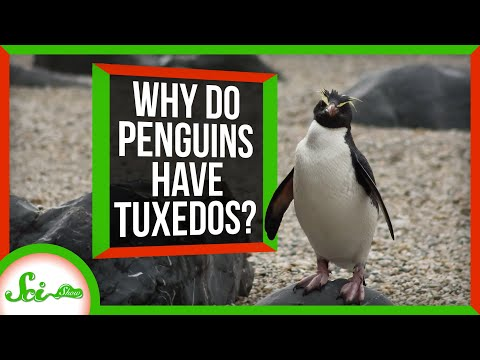 Countershading: Why Do Penguins Wear Tuxedos?